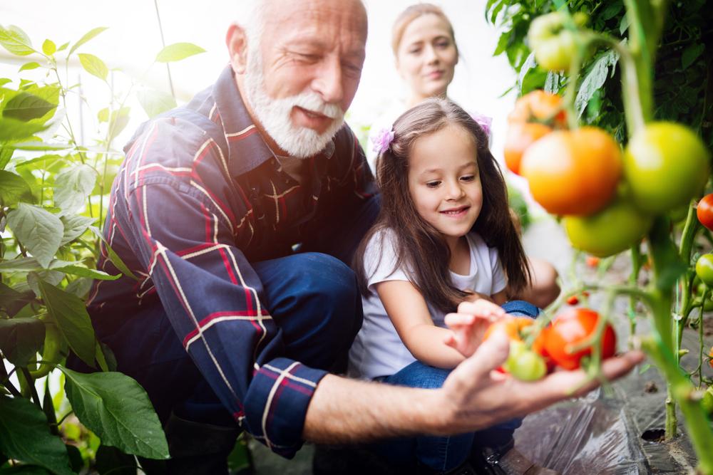 Valores Para a Continuidade da Família Empresária